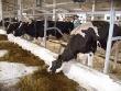 Ученый из Владимира рассказал тюменцам о секретах содержания импортного скота