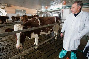 В Ростовской области начали массовую обработку скота от клещей