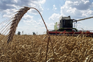 Российской пшеницы стало не хватать