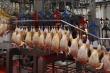 Бенефициары куриного гриппа. как птицеводы Ленобласти заработали в кризис