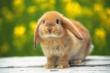 """""""Оренбургский кролик"""" намерен увеличить производство мяса в 1,7 раза, до 480 тонн в год"""