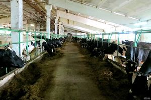 На Сахалине реанимируют одно из старейших животноводческих предприятий