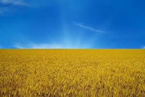 Сможет ли Украина нарастить экспортный потенциал на рынке мяса - эксперты