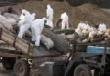 Уголовное дело заведено на Кубани в связи со вспышкой АЧС