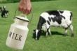 Минземледелия Латвии: ситуация в молочной отрасли приближается к критической
