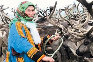 На Ямале медведи выгнали кочевников со стойбища, устроив охоту на их оленей