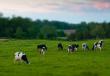 Новые модели развития мясного животноводства обсудили в Вологодской области