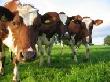 Власти Ставрополья подготовили субсидии для животноводов