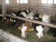 В Пензенской области производство мяса выросло на 7%