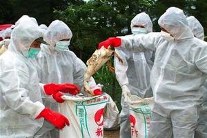 В Японии из-за вируса птичьего гриппа забьют более 90 тыс. кур