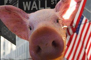 Смертельный вирус свиней мог попасть в США на гибких контейнерах