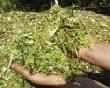 Хабаровские власти предложили аграриям наладить собственное производство кормов