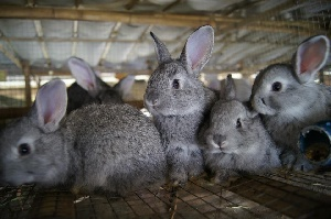 В Кемеровской области продают кролиководческую ферму за 4,9 млн рублей