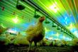 Тухлый номер Россияне рискуют закупиться отравленными продуктами и умереть