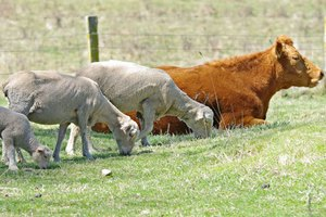 В Хворостянском районе Самарской области зарождается крупный животноводческий комплекс