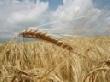 Аграрии Мордовии подвели итоги работы отрасли за 2011 год
