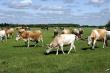 Костанайская область Казахстана намерена увеличивать экспорт говядины