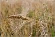 Уральские фермеры требуют льготы на топливо