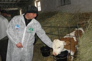 В Судиславском районе Костромской области на средства областного гранта реконструировано помещение под содержание телят