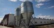 После реконструкции мощность птицефабрики «Островная» возрастет втрое