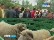 В Саратове прошла выставка сельскохозяйственных животных