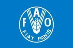 ФАО проведет экстренное совещание в Азии из-за АЧС в Китае