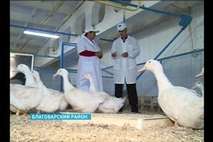 Башкирские птицеводы подводят итоги сезона