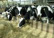 Животноводы Оренбуржья завершают перевод скота на зимне-стойловое содержание
