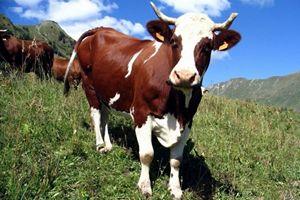 В Тукаевском районе Татарстана заработал новый животноводческий комплекс на 400 коров