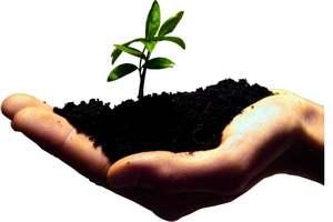 Правительство выступило против запрета пальмового масла и ГМО