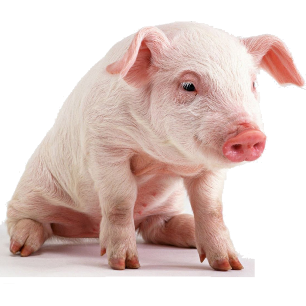 Престартер для поросят Piglet Srart