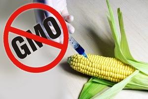 Россельхознадзор ограничил ввоз кормов с ГМО