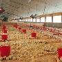 Акционеры Михайловской птицефабрики планируют одобрить крупные сделки