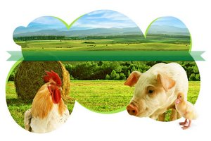 В Омской области строятся новые животноводческие комплексы
