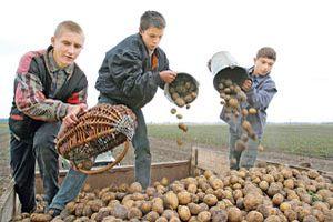 """Проект """"Агроцивилизация"""" охватит все школы Тюменской области"""