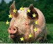 Действительно ли Европа собирается продолжать производство свиней?
