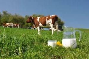 Китай намерен развивать в Приморье молочную промышленность