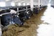 В Кировской области открыли новый животноводческий комплекс