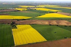 Эксперты не видят положительных перспектив для растениеводства на 2016 год
