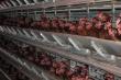 В Ярославской области птицефабрика выплатила около двух миллионов рублей за загрязнение реки Ковать