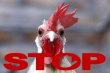 На Южный Урал временно запретили ввоз птицы и яиц из Казахстана