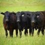 На Брянщине развивается животноводство