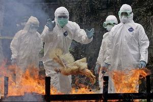На Тайване забивают птицу из-за вспышки птичьего гриппа