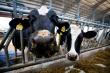 Производство говядины будут увеличивать в Ростовской области