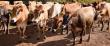 Омская область: производство продукции животноводства