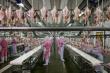 15 китайских птицефабрик получили разрешение на поставки замороженного мяса птицы в Россию