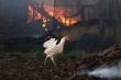Во Франции при пожаре на ферме сгорело более 30 тысяч цыплят