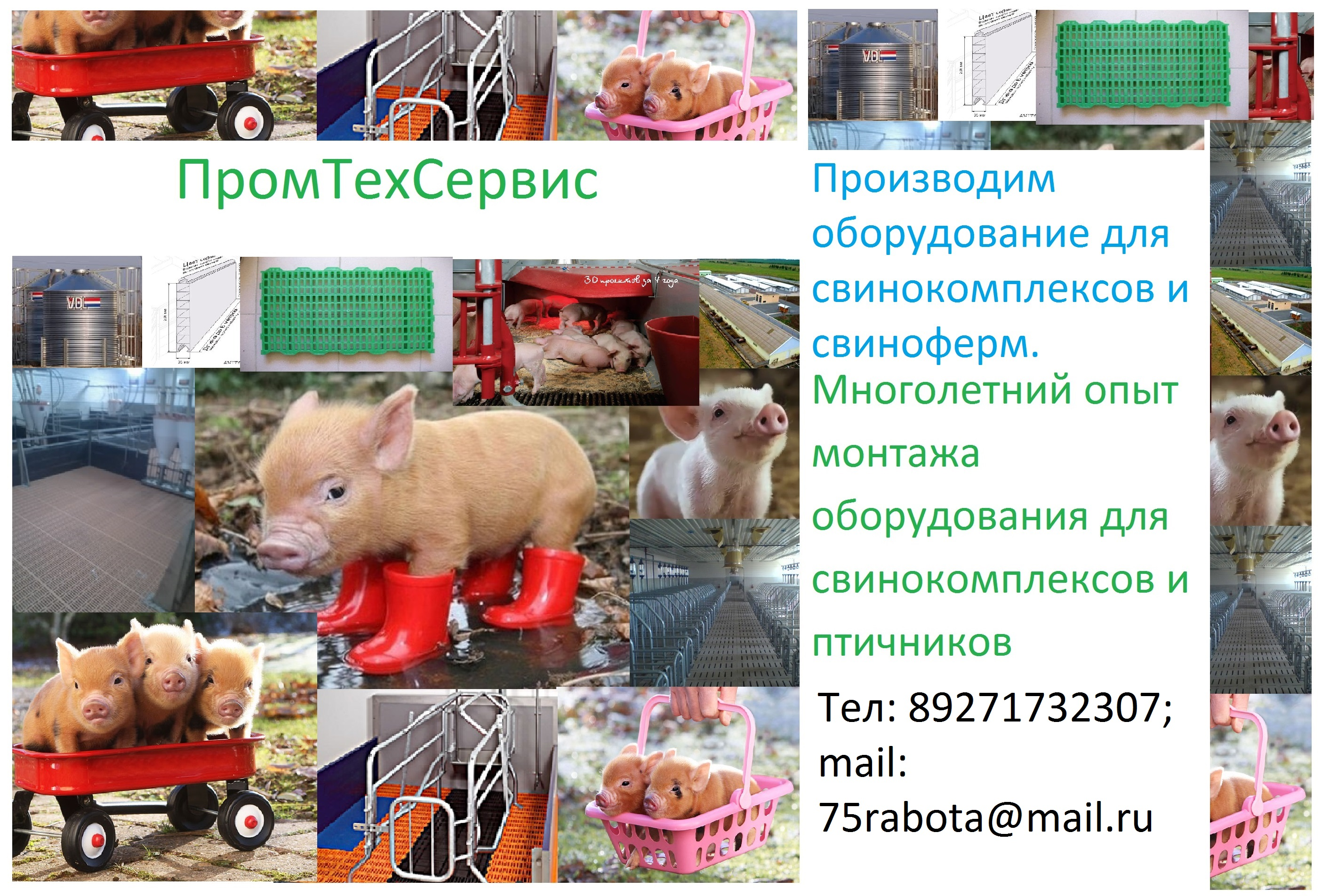Оборудование для свинокомплексов и свиноферм