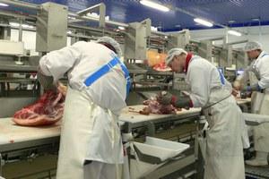 В Туве началось строительство мясокомбината мощностью 2 тысячи тонн мяса в год