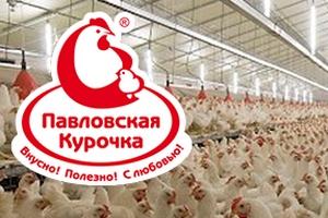 «Павловскую» птицефабрику проверят на птичий грипп